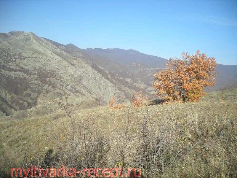 Поход за грибами в Крымских лесах